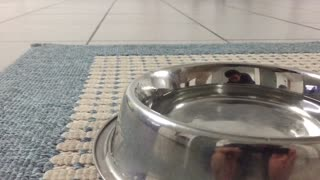 Pup drinking water in slow motion