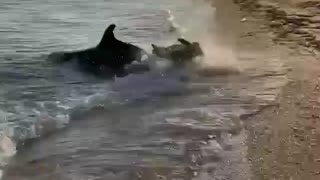 Dog and a shark