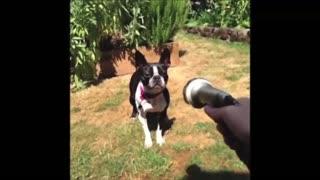Funny animals talking