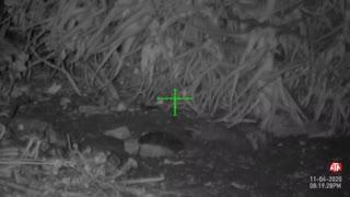 Bushido's HW100 Night Vision Rat Hunting 11/05/20