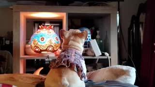 Gwen Watches TV