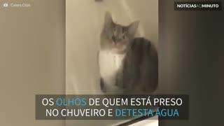 Gato leva susto hilário ao ficar preso no box do chuveiro