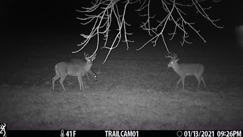 Tag teaming, two bucks against one
