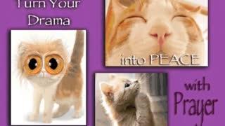 Turn Your Drama Into Peace mp4