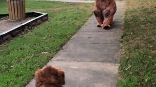 Hunter meets a dinosaur
