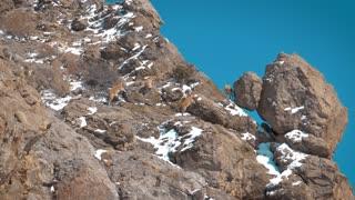 Mountain Goats on a Rocky Mountain