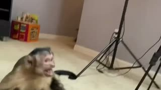 Man plays with monkey