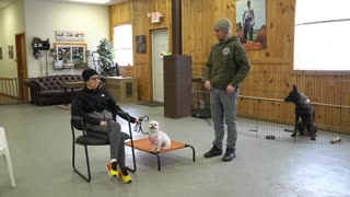 How To Build Confidence In A Nervous Rescued Dog