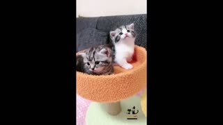 Cute Funny Animals Dogs And Cats Compilation   #1