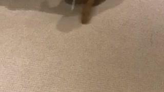 Wet dog does the carpet dance
