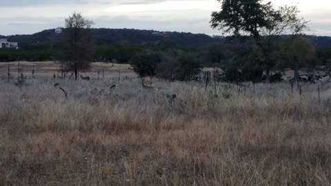 Over Here, Deer!