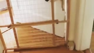 Don't try to make a gate for cats because it doesn't work