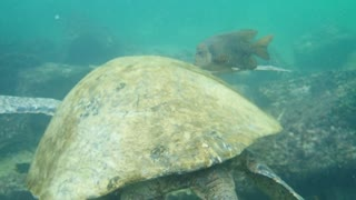 Turtle Shell Cleaning