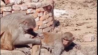 Monkey having a great work