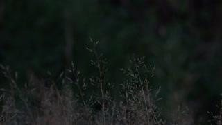 Dark night with wild straw