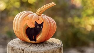 Halloween cat cute and sweet