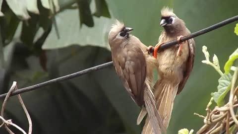beautiful birds singing (9)