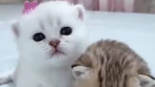 Cute Kitten Baby Cat Funny Cat Videos happy