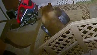Bright Bear Breaks into Trash Can