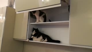 Fat cat fell out of the closet