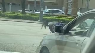 Officer and Horse Take a Tumble at Intersection