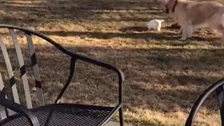Cute rabbit playing with a dog