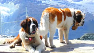 The 10 Most Powerful Dogs in the World [2021]