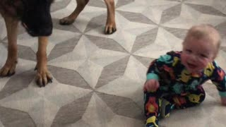 Zeke the GSD Playing with Boy