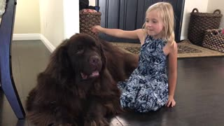 Little girl reunites with huge puppy after summer vacation
