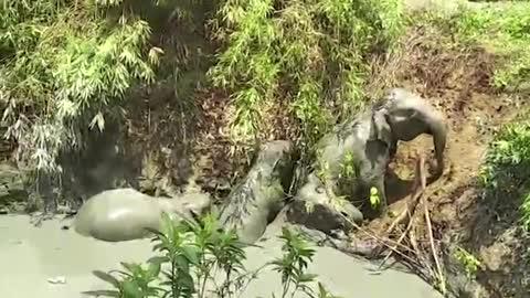 Myanmar villagers free elephants stuck in mud pit