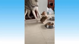 Funny Cats,dogs with owners