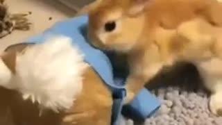 Cute Rabbit Wearing Jacket