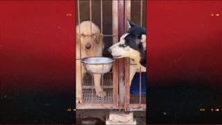 cute dogs fighting over food