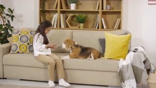 Dogs Behavior