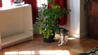 Francine and the jasmine plant - part 3