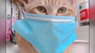 CAT WEARING PROTECTIVE MASK