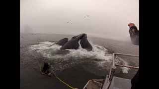 Whales almost eat Divers