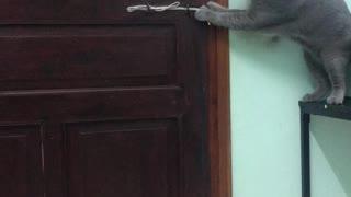 Kitty Defies Locked Door