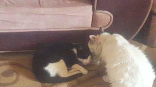 Cat. Animal lover