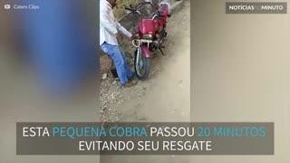 Cobra é encontrada dentro de moto na Índia