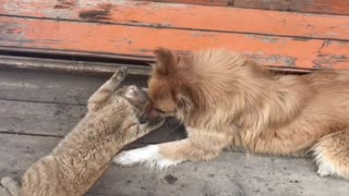 Two best friends can't live without each other