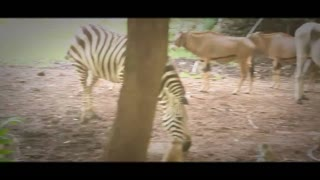 Compilation of videos from my trip to Kenya