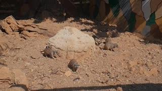 meerkats on vacation