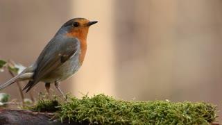 funny birds short film