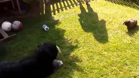 Dog and bunny rabbit share unique friendship