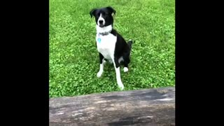 Dog and Dad both fail with tennis ball