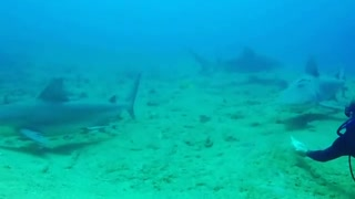 Experienced Diver Feeding Big Fishes At The Bottom Of The Sea