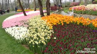 Tulip Festival in Istanbul, Turkey