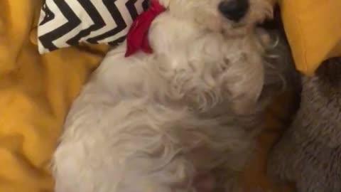 Sleepy dogo enjoying his bed