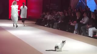 Actual cat walks down catwalk at fashion show